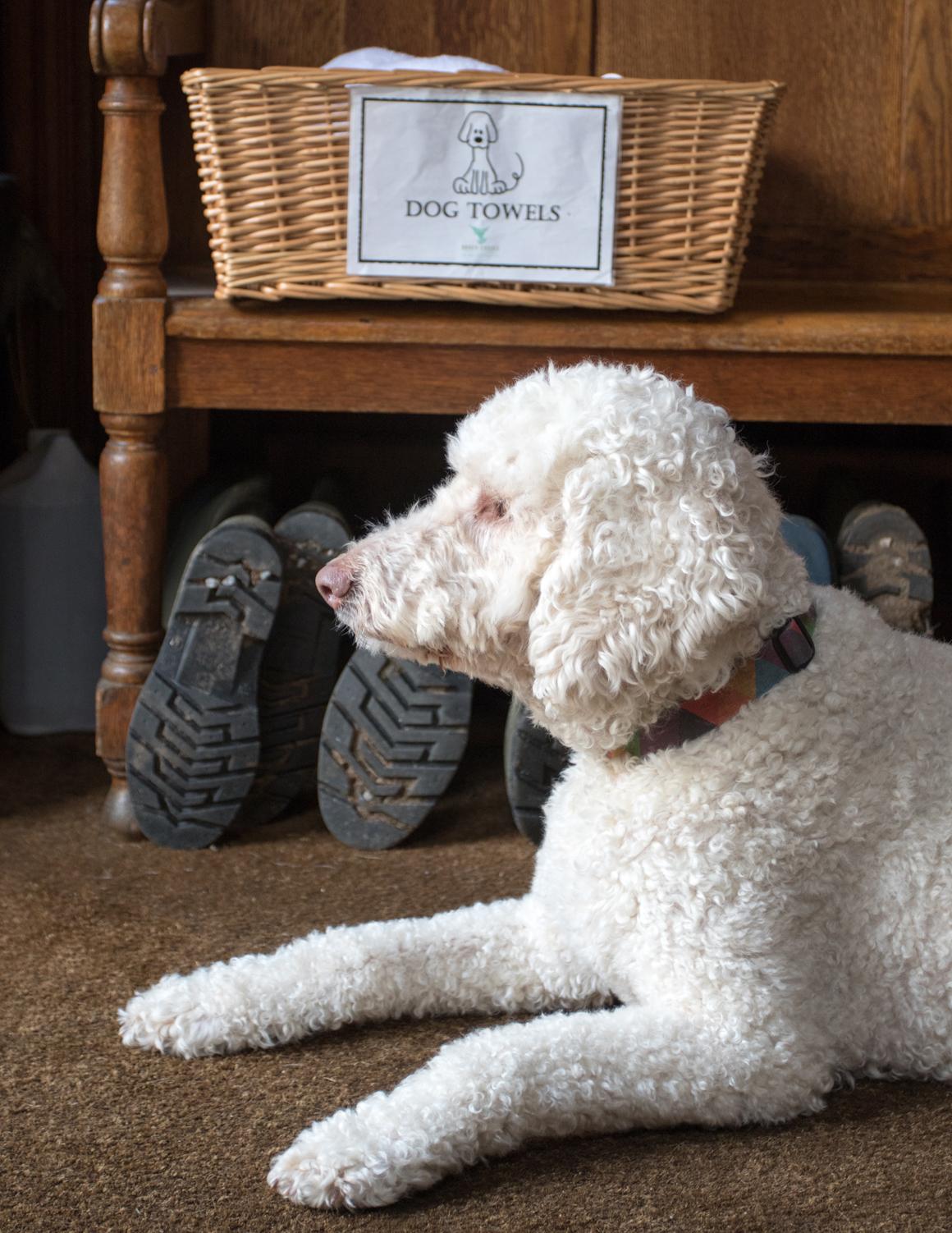 Dog Friendly Devon Holidays