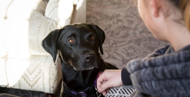 dog friendly hotel devon