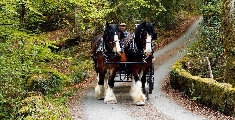 spring staycation dartmoor